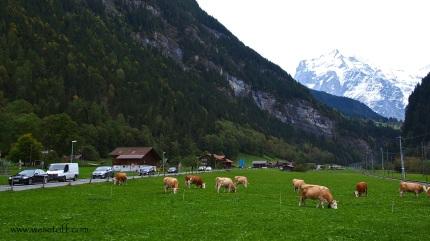 on the way to Jungfraujoch, Switzerland